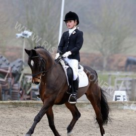 Wicked Courtjester Offspring Success In European- International FEI Level