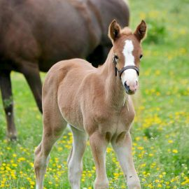 Nothing cuter than pony foals!