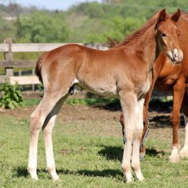 A New Year, A New Batch of Foals: What to Expect in 2018